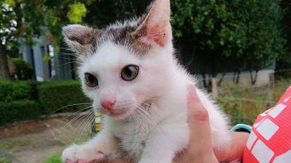"""Jogster betrapt vrouw bij dumpen van kitten: """"Ik kook van woede"""""""