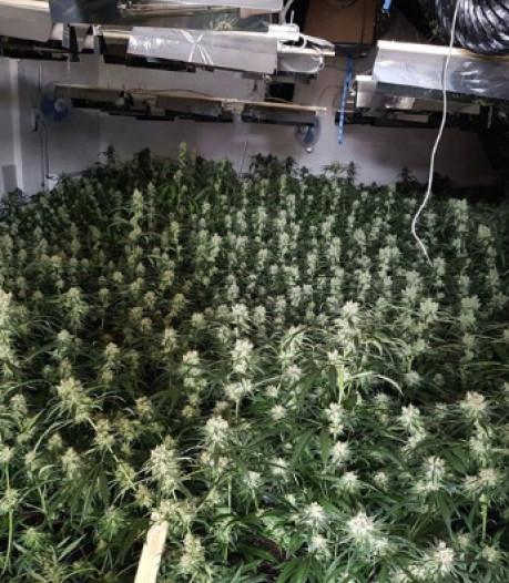 Hennepkwekerij met 700 planten opgerold in Almelo