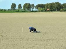 Landbouwgrond stuk goedkoper in Zeeland