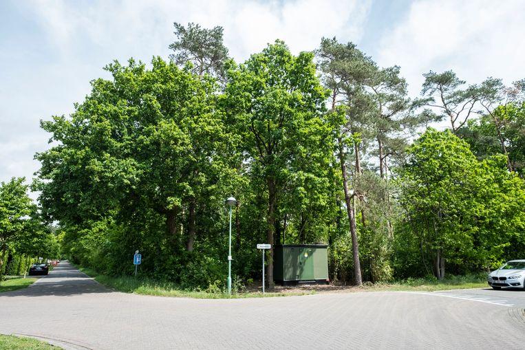 Het Picardiebos in Schilde.