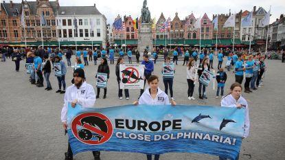 Bite Back voert actie in Brugge tegen dolfinaria
