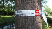 Tientallen meldingen processierups: gemeente schakelt civiele bescherming in