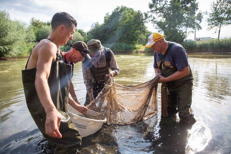 Een vijver in Bathmen wordt leeggevist om de vissen te redden van gebrek aan zuurstof. Beeld herman engbers