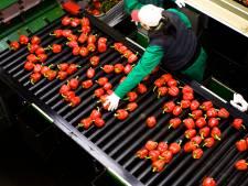 Bio-boeren: schrap belasting op biologisch voedsel
