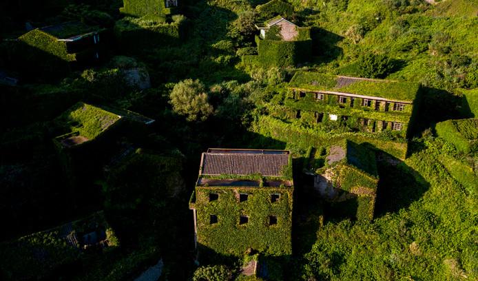 De huizen zijn volledig overwoekerd door planten.