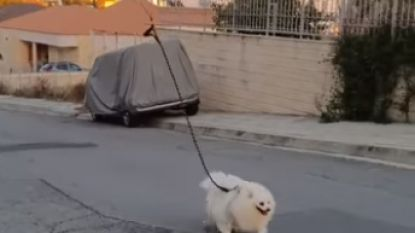 Baasje in quarantaine laat hond uit met op afstand bestuurbare drone