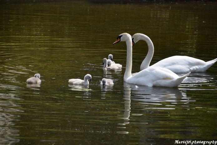 Het paar en haar kinderen in Kromhoutpark