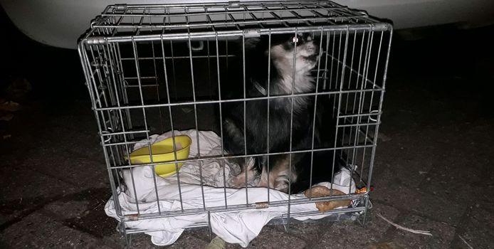 Chihuahua Skittle werd gevonden in een bench.
