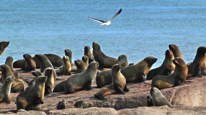 Ook wilde dieren hebben plastic in uitwerpselen