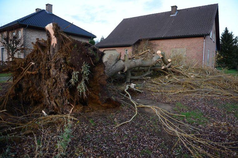 Een boom valt net niet op een woning in de Molenstraat in Rotselaar (foto rechts).