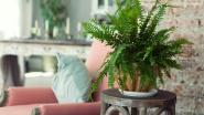 Zo overleven jouw kamerplanten wel in de winter
