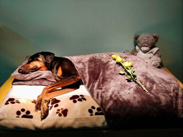 De overleden hond Jack