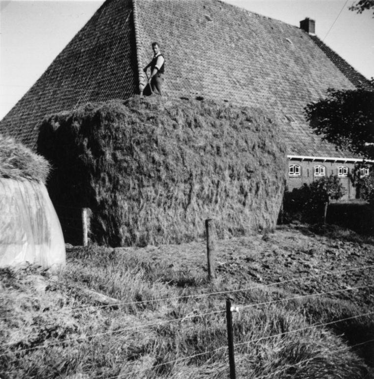 Boer Siebe Peenstra op zijn boerderij in Wommels. Beeld Thomas Rap