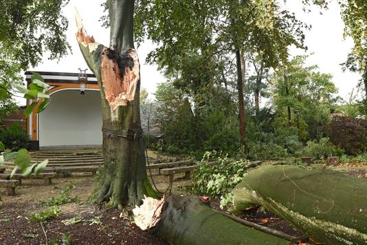 De grootste boom van de tuin bleek niet bestand tegen de stormvlagen.  Casper van Aggelen / Pix4Profs