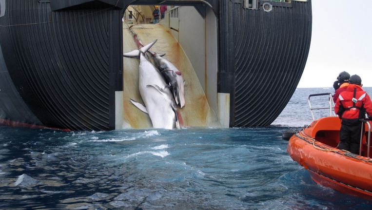 De Japanse harpoeneerboot in 2008. Deze foto is naar buiten gebracht door de Australische overheid. Beeld AP