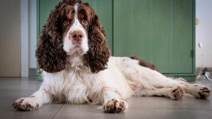 Honden vergiftigd aan hypodroom