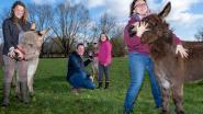 """Ergotherapeute gaat ezels inzetten in haar praktijk: """"Dieren kunnen kinderen doen openbloeien"""""""