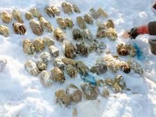 Mysterie afgehakte handen in Siberië deels ontrafeld