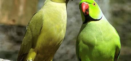 Burense zwerfvogels voortaan opgevangen in Tiel