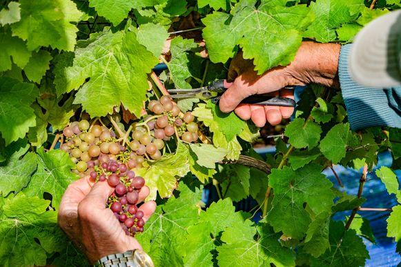 Het wijndomein Entre-Deux-Monts is ondertussen uitgegroeid tot 18 hectare en is gekend voor z'n witte en mousserende wijnen.