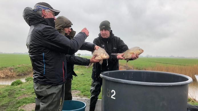De vissen uit de plas bij het Kraaiennest worden vandaag en morgen verhuisd.