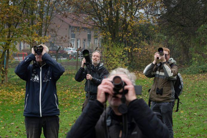 Het Bladkoninkje trekt veel vogelaars in Geldermalsen.