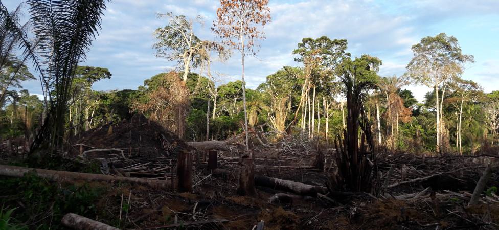 Meindert Brouwer zet zich in voor het regenwoud van Congo: 'Er verdwijnt 8000 km2 per jaar'