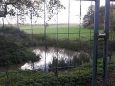 Asbest in natuur Den Dungen aangetroffen: 'komt van de bloemkweker'