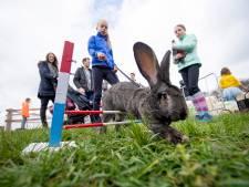 Konijnenparcours Bunny Hop in Geesteren haalt het jeugdjournaal