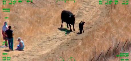 Amerikaans stel gered door helikopter na aanval koe