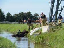 Paard belandt in Wateringse sloot