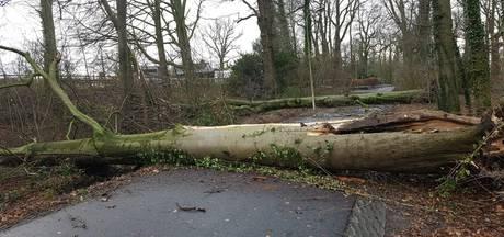 'Haerstraat in Oldenzaal vol met slechte bomen''