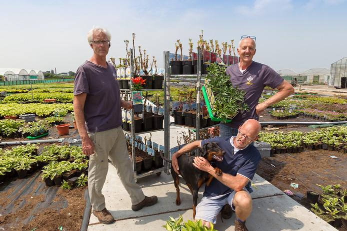 De broers Griffioen, Arie (l.), Gerard (r.) en Louis hebben zich 30 jaar geleden op Berkenbroek gevestigd. Het jonge boomteeltgebied is de locatie van Open Kwekerijdag op 16 juni.