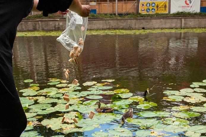 De gemeente Gouda heeft borden geplaatst die het voeren van eenden afraden.