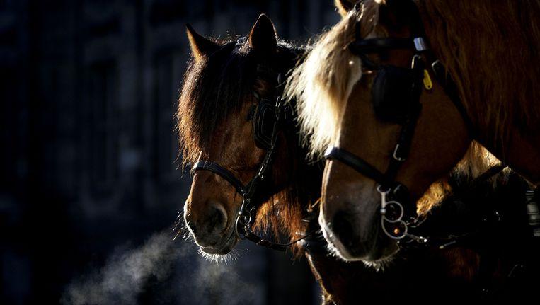 Paarden op de Dam die staan te wachten toeristen die met paard en wagen een rondrit door de stad willen maken Beeld ANP