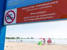 Blauwalg op drie plekken in Brielse Meer: 'Ga daar niet zwemmen'