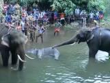 India verontwaardigd na dood van olifant