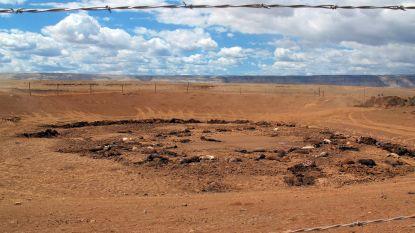 Bijna 200 dode paarden ontdekt in Arizona: hoe de zoektocht naar water hun tragische dood werd