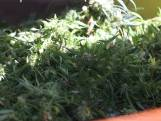 Politie rolt hennepkwekerij met duizend planten op in Eindhoven