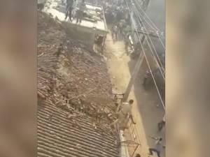 Man springt van dak om te ontkomen aan een luipaard