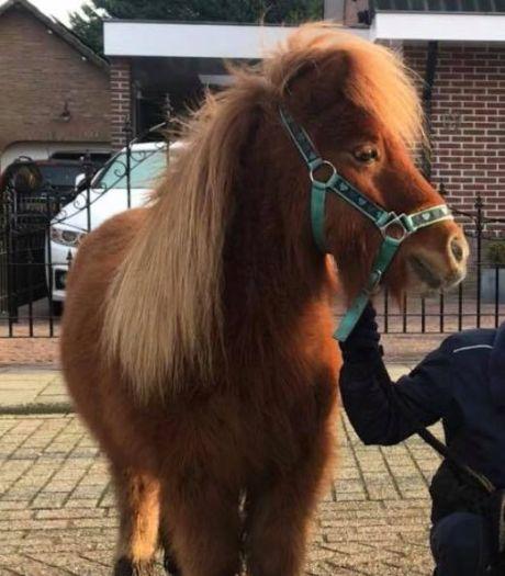 Pony Rico al een week lang vermist: dier is vermoedelijk gestolen uit de wei