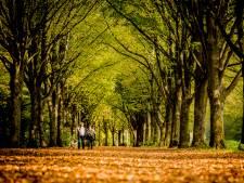 Herinrichting Amsterdamse Bos:  meer natuur en rust