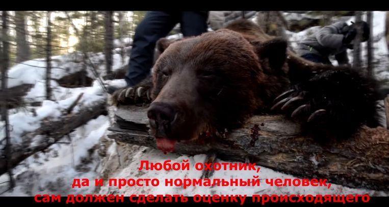 De doodgeschoten beer op een still van een filmpje dat over het doodschieten van het dier werd verspreid.