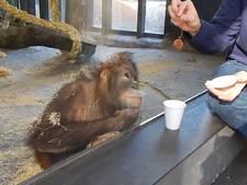 De leukste apen op de internationale Dag van de Aap