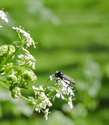 Het is géén fruitvlieg. Maar wat cirkelt er dan wel rond je kamerplant?