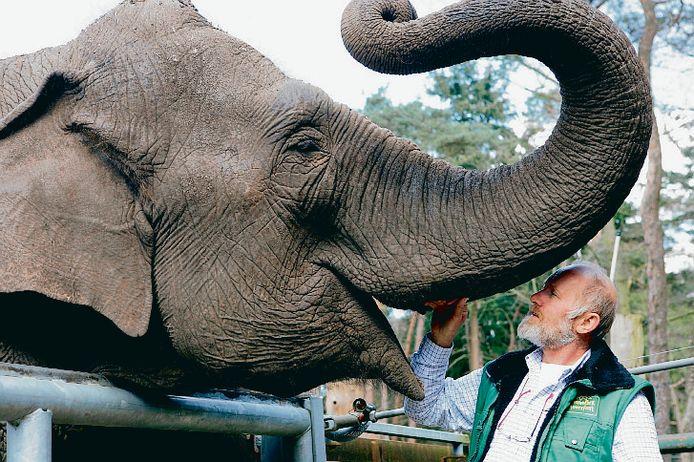 Female ♀ Asian elephant (<em>Elephas maximus</em>) Indra at Amersfoort Zoo