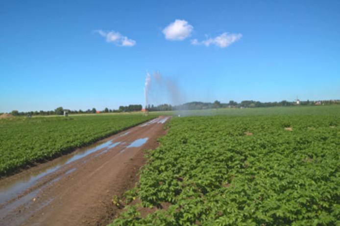 Oppervlaktewater kan besmet zijn met de bacterie die in aardappelen bruinrot veroorzaakt.