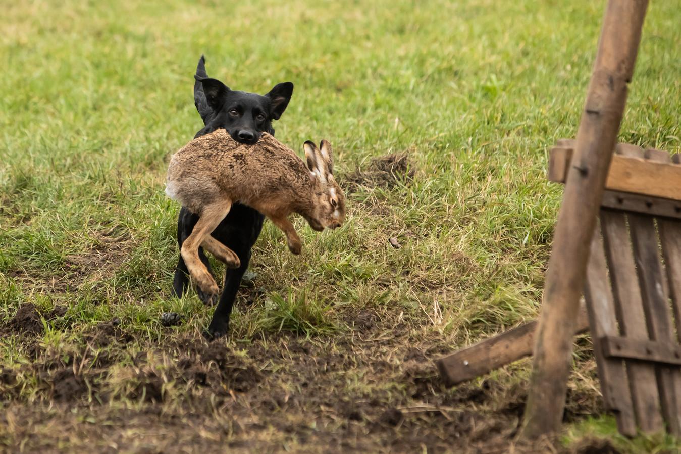 Honden in delen van het Boxmeerse buitengebied moeten aan de riem.