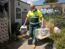 Dierenzorg Eemland koestert ijdele hoop op meer subsidie; Baarn, Leusden en Nijkerk houden hand op de knip