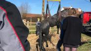 Paard komt in gracht terecht: brandweer heeft twee uur tijd nodig om dier op het droge te krijgen